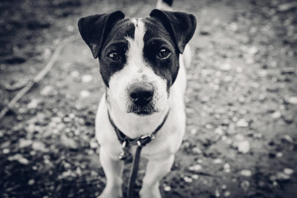 - Jeg fikk ikke tatt bilde av den søte hunden, men her er en som ligner.